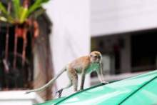 Monkey now a security risk?