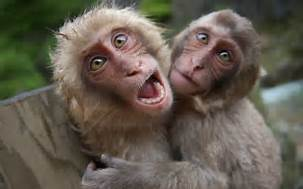 Oxleygate: We got monkeys as ministers isit?