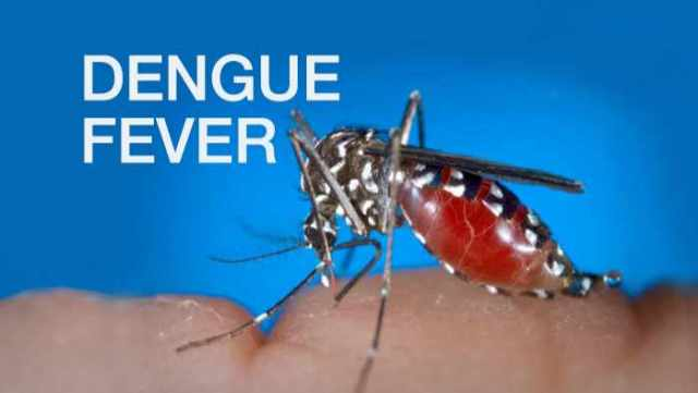 Government responsible for the dengue outbreak